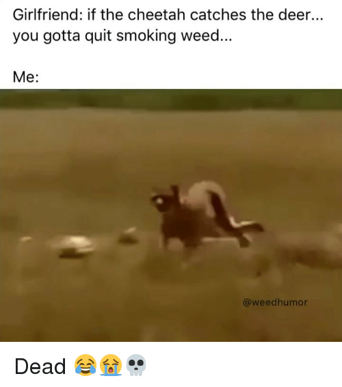 quit smoking: Girlfriend: if the cheetah catches the deer..  you gotta quit smoking weed.  Me:  @weedhumor Dead 😂😭💀