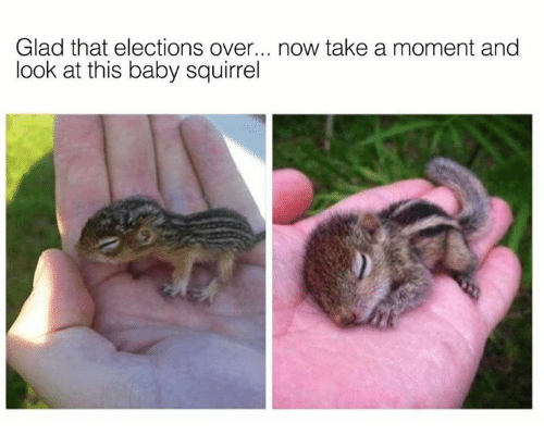 Memes, Squirrel, and Baby: Glad that elections over... now take a moment and  look at this baby squirrel