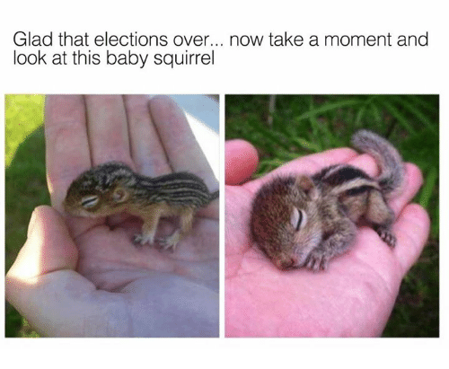 Dank, Squirrel, and Baby: Glad that elections over... now take a moment and  look at this baby squirrel