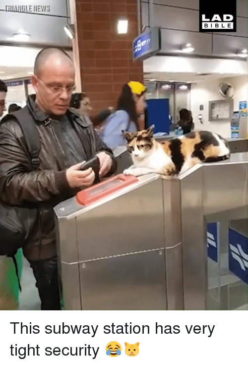 Dank, News, and Subway: GLE NEWS  LAD  BIBL E This subway station has very tight security 😂🐱