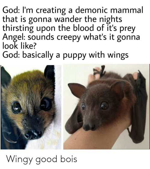 blood: God: I'm creating a demonic mammal  that is gonna wander the nights  thirsting upon the blood of it's prey  Angel: sounds creepy what's it gonna  look like?  God: basically a puppy with wings Wingy good bois