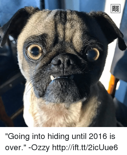 "Memes, 🤖, and Ozzy: ""Going into hiding until 2016 is over."" -Ozzy http://ift.tt/2icUue6"