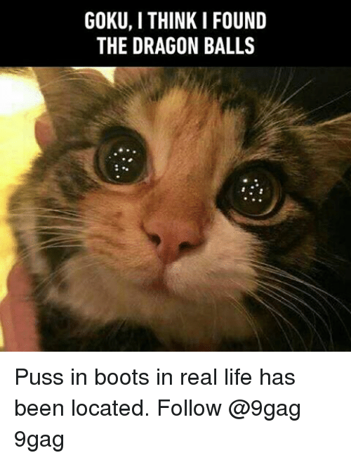 Pussing: GOKU, I THINK I FOUND  THE DRAGON BALLS  NS  UL  OL  FA  IB  KN  NO  HA  TR  ID  UE  OT Puss in boots in real life has been located. Follow @9gag 9gag