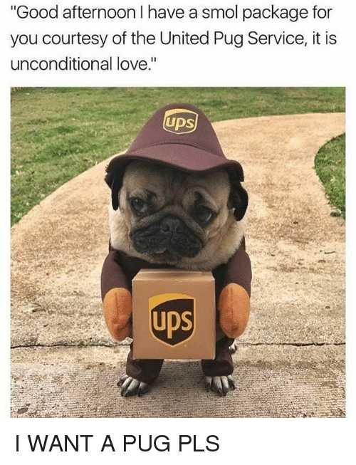 """Pugly: Good afternoon I have a smol package for  you courtesy of the United Pug Service, it is  unconditional love.""""  UDS  UDS I WANT A PUG PLS"""