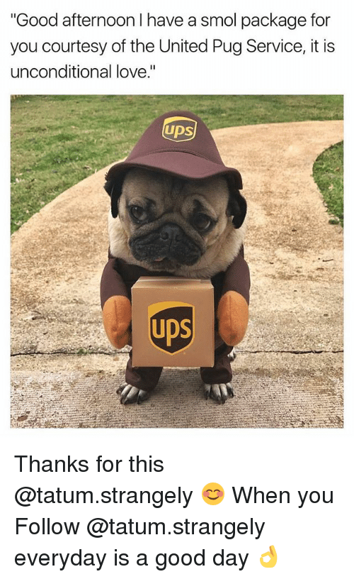 """Pugly: """"Good afternoon I have a smol package for  you courtesy of the United Pug Service, it is  unconditional love.""""  UDS  UDS Thanks for this @tatum.strangely 😊 When you Follow @tatum.strangely everyday is a good day 👌"""