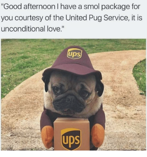 """Pugly: Good afternoon I have a smol package for  you courtesy of the United Pug Service, it is  unconditional love.""""  UDS"""