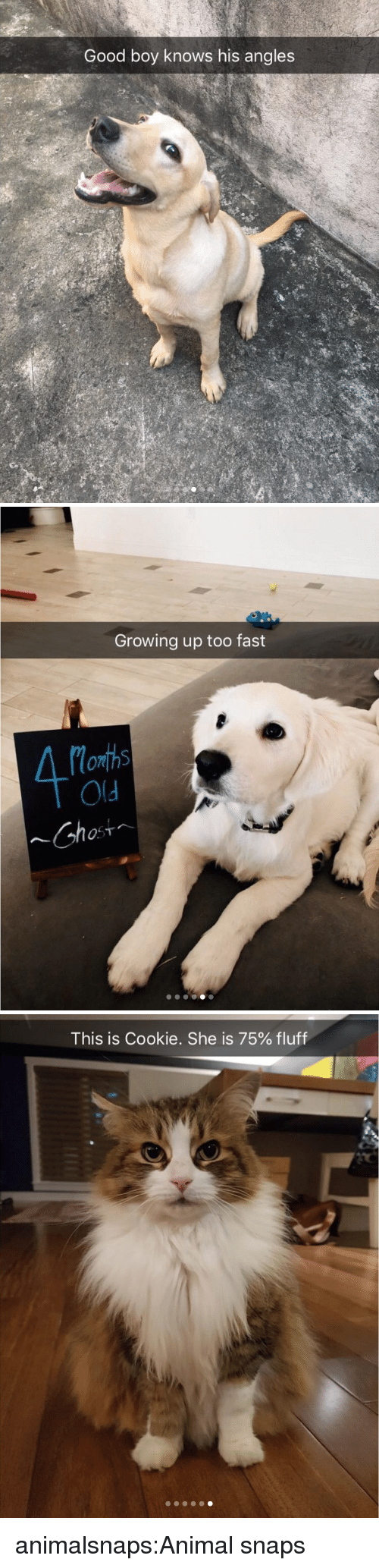 Growing Up, Target, and Tumblr: Good boy knows his angles   Growing up too fast  4%.  077  Old  Chos   This is Cookie. She is 75% fluff animalsnaps:Animal snaps