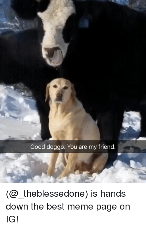 Meme, Memes, and Best: Good doggo. You are my friend (@_theblessedone) is hands down the best meme page on IG!