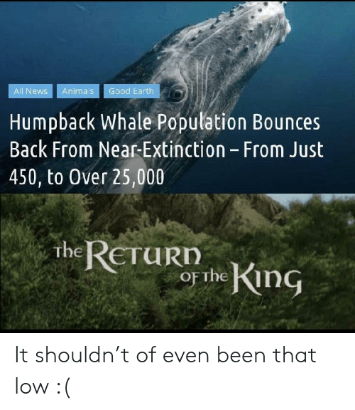 whale: Good Earth  All News  Animals  Humpback Whale Population Bounces  Back From Near-Extinction - From Just  450, to Over 25,000  the RETURD  or the King It shouldn't of even been that low :(