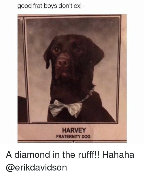 Fraternity, Memes, and Diamond: good frat boys don't exi  HARVEY  FRATERNITY DOG A diamond in the rufff!! Hahaha @erikdavidson