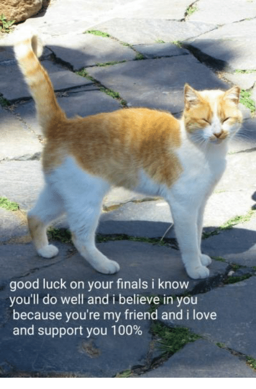 Anaconda, Finals, and Love: good luck on your finals i know  you'll do well and i believe in you  because you're my friend and i love  and support you 100%