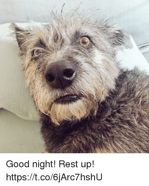 Memes, Good, and 🤖: Good night! Rest up! https://t.co/6jArc7hshU