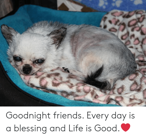 Friends, Life, and Memes: Goodnight friends.  Every day is a blessing and Life is Good.❤️