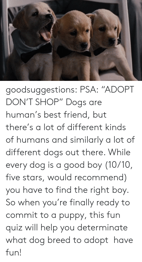 "Best Friend, Dogs, and Gif: goodsuggestions:  PSA: ""ADOPT DON'T SHOP"" Dogs are human's best friend, but there's a lot of different kinds of humans and similarly a lot of different dogs out there. While every dog is a good boy (10/10, five stars, would recommend) you have to find the right boy. So when you're finally ready to commit to a puppy, this fun quiz will help you determinate what dog breed to adopt  have fun!"