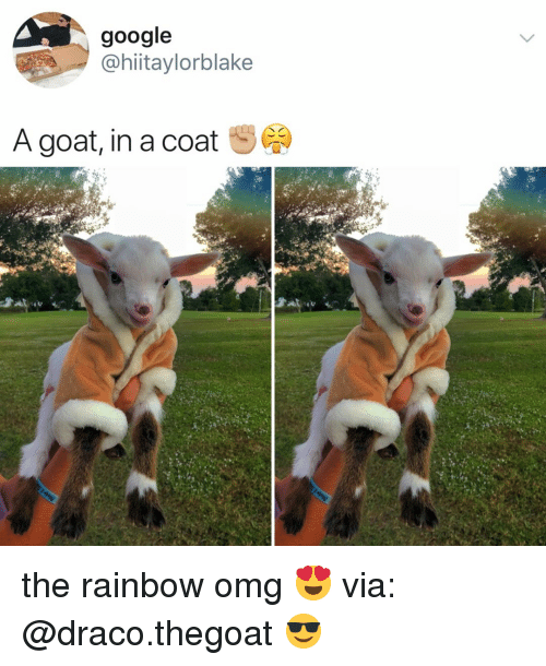 Google, Omg, and Goat: google  @hiitaylorblake  A goat, in a coat the rainbow omg 😍 via: @draco.thegoat 😎