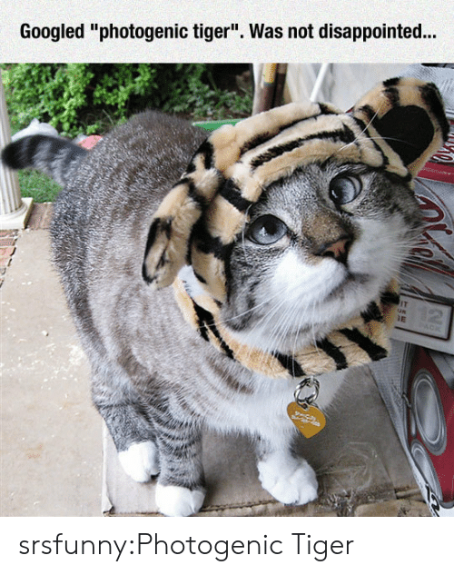 """Was Not Disappointed: Googled """"photogenic tiger"""". Was not disappointed.. srsfunny:Photogenic Tiger"""