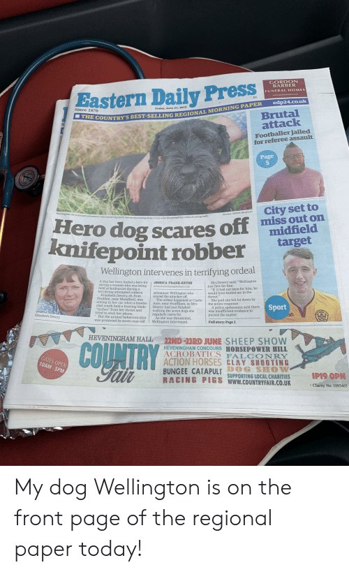"Barber, Blade, and Dogs: GORDON  BARBER  tastern Daily Press  THE COUNTRY'S BEST-SELLING REGIONAL MORNING PAPER  FUNERAL HOMES  www.gordonbarber.com  1  edp24.co.uk  Friday, June 21, 2019  Since 1870  Brutal  attack  S  Footballer jailed  for referee assault  Page  City set to  miss out on  midfield  target  Wellington the standard schnauzer who saved Elizabeth Devery by scaring away a man who threatened her witha hunting knife  Pictures: DENISE BRADLEY  Hero dog scares off  knifepoint robber  Wellington intervenes in terrifying ordeal  Mrs Devery said: ""Wellington  just flew for him.  ""If it had not been for him, he  would have knifed me in the  throat.""  She said she felt let down by  the police response.  A police spokesman said there  was insufficient evidence to  pursue the matter  A dog has been hailed a hero for  saving a woman who was being  held at knifepoint during a  terrifying attempted robbery  Elizabeth Devery, 59, from  Foulden, near Mundford, was  sitting in her car when a hoodie-  clad youth held a hunting blade  ""inches"" from her throat and  tried to steal her phone.  But the animal behaviouralist  was protected by seven-year-old  JESSICA FRANK-KEYES  jessica.frank-keyes@archant.co.uk  schnauzer Wellington who  scared the attacker off.  The ordeal happened at Castle  Acre, near Swaffham, as Mrs  Devery had just finished  walking the seven dogs she  regularly cares for  As she was threatened,  Wellington intervened.  Sport  ELL  HERWE  Elizabeth Devery  EST 159  Full story: Page 2  HEVENINGHAM HALL  COUNTRY  22ND -23RD JUNE SHEEP SHOW  HEVENINGHAM CONCOURS HORSEPOWER HILL  ACROBATICS FAL CONRY  ACTION HORSES CLAY SHOOTING  CATAPULT SUPPORTING LOCAL CHARITIES  RACING PIGS www.COUNTRYFAIR.CO.UK  GATES OPEN  10AM-5PM  Falr  IP19 OPN  Charity No. 1095403 My dog Wellington is on the front page of the regional paper today!"