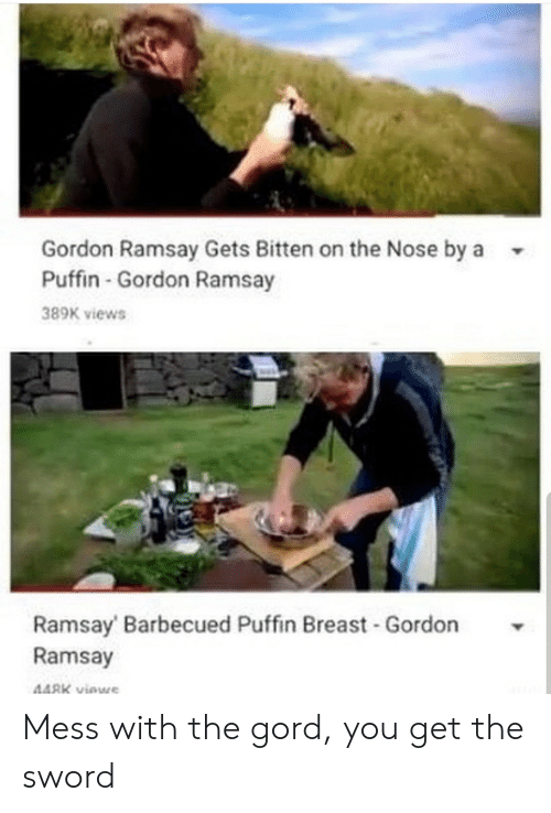 Gordon Ramsay: Gordon Ramsay Gets Bitten on the Nose by a  Puffin-Gordon Ramsay  389K views  Ramsay Barbecued Puffin Breast -Gordon  Ramsay  448K viewe Mess with the gord, you get the sword