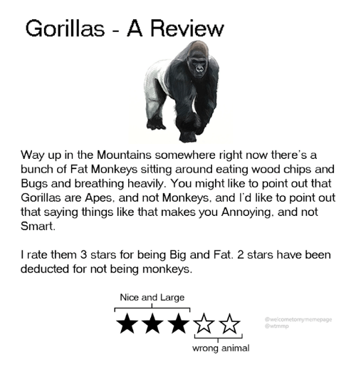 Dank, Animal, and Stars: Gorillas - A Review  Way up in the Mountains somewhere right now there's a  bunch of Fat Monkeys sitting around eating wood chips and  Bugs and breathing heavily. You might like to point out that  Gorillas are Apes, and not Monkeys, and I'd like to point out  that saying things like that makes you Annoying. and not  Smart.  I rate them 3 stars for being Big and Fat. 2 stars have been  deducted for not being monkeys  Nice and Large  @welcometomymemepage  @wtmmp  wrong animal