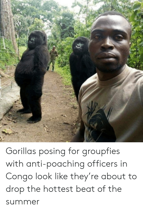 Summer, Anti, and Congo: Gorillas posing for groupfies with anti-poaching officers in Congo look like they're about to drop the hottest beat of the summer