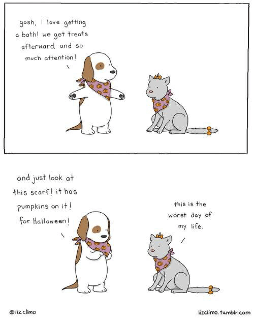 Lizclimo Tumblr: gosh, I love getting  bath! we  get treats  a  afterward, and so  much attention  and just look at  this scarf! it has  it!  pumpkins  this is the  on  worst day of  for Halloween  my life.  liz climo  lizclimo. tumblr.com