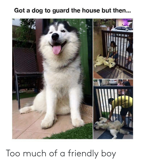 A Dog: Got a dog to guard the house but then... Too much of a friendly boy