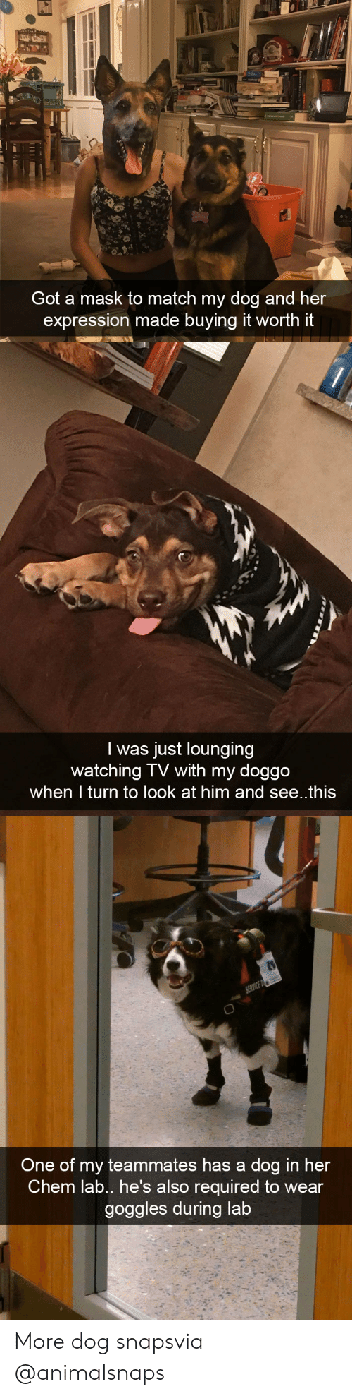 Target, Tumblr, and Http: Got a mask to match my dog and her  expression made buying it worth it   I was just lounging  watching TV with my doggo  when I turn to look at him and see..this   One of my teammates has a dog in her  Chem lab., he's also required to wear  goggles during lab More dog snapsvia @animalsnaps