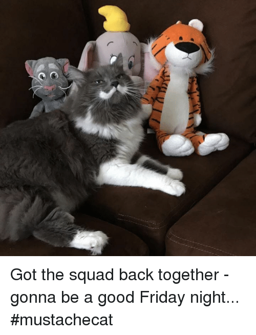 Friday, Memes, and Squad: Got the squad back together - gonna be a good Friday night... #mustachecat