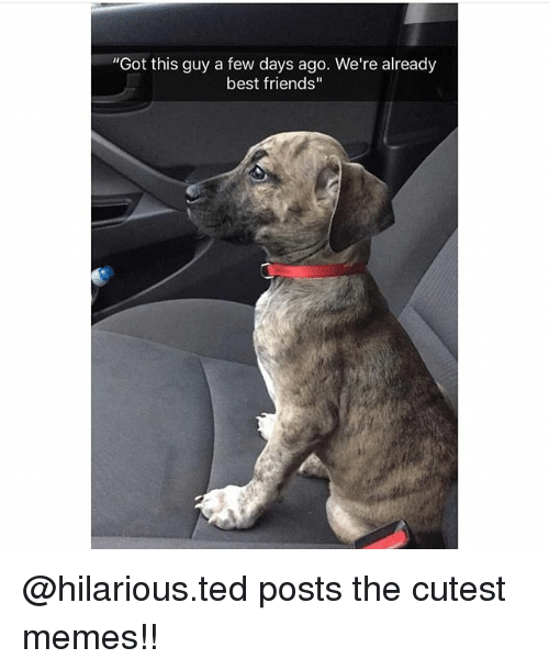 "Friends, Memes, and Ted: ""Got this guy a few days ago. We're already  best friends"" @hilarious.ted posts the cutest memes!!"