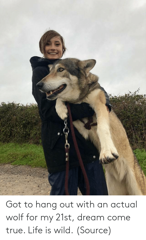 dream: Got to hang out with an actual wolf for my 21st, dream come true. Life is wild.(Source)