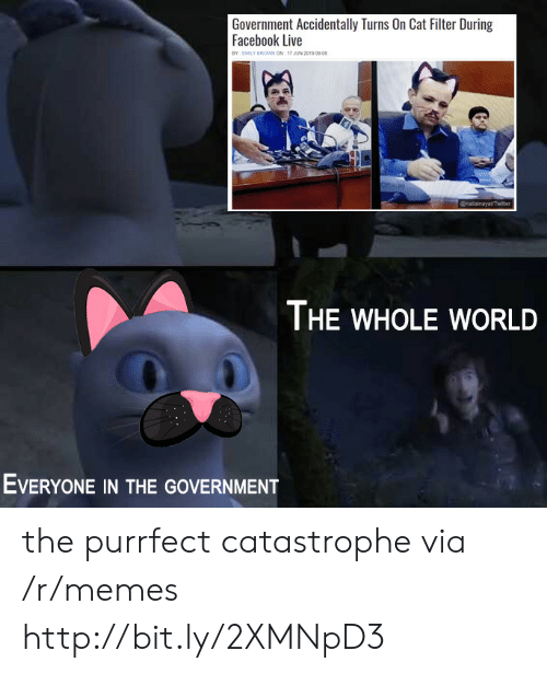 Facebook, Memes, and Twitter: Government Accidentally Turns On Cat Filter During  Facebook Live  BY EMILY BROWwN ON 17 JUN 2019 09 08  @nailainayat/Twitter  THE WHOLE WORLD  EVERYONE IN THE GOVERNMENT the purrfect catastrophe via /r/memes http://bit.ly/2XMNpD3