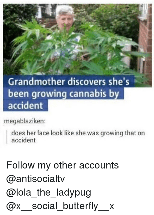 Memes, Butterfly, and Socialism: Grandmother discovers she's  been growing cannabis by  accident  16  megablaziken:  does her face look like she was growing that on  accident Follow my other accounts @antisocialtv @lola_the_ladypug @x__social_butterfly__x