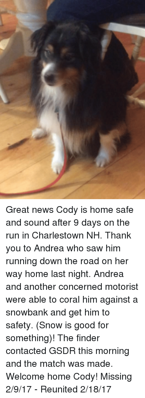 Memes, News, and Run: Great news Cody is home safe and sound after 9 days on the run in Charlestown NH.   Thank you to Andrea who saw him running down the road on her way home last night.  Andrea and another concerned motorist were able to coral him against a snowbank and get him to safety. (Snow is good for something)! The finder contacted GSDR this morning and the match was made.    Welcome home Cody!    Missing 2/9/17 - Reunited 2/18/17