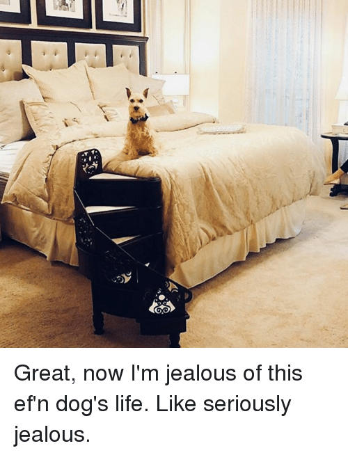 Dank, Dogs, and Jealous: Great, now I'm jealous of this ef'n dog's life.   Like seriously jealous.