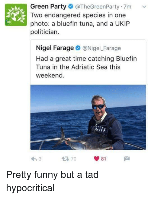 Funny, Memes, and Party: Green Party  @TheGreenParty.7m v  Two endangered species in one  photo: a bluefin tuna, and a UKIP  politician.  Nigel Farage  @Nigel Farage  Had a great time catching Bluefin  Tuna in the Adriatic Sea this  weekend  UNA  81 Pretty funny but a tad hypocritical