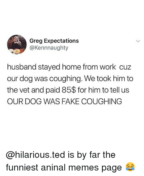 Fake, Memes, and Ted: Greg Expectations  @Kennnaughty  husband stayed home from work cuz  our dog was coughing. We took him to  the vet and paid 85$ for him to tell us  OUR DOG WAS FAKE COUGHING @hilarious.ted is by far the funniest aninal memes page 😂