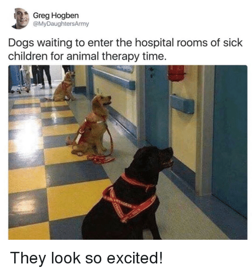 Children, Dogs, and Animal: Greg Hogben  @MyDaughtersArmy  Dogs waiting to enter the hospital rooms of sick  children for animal therapy time. They look so excited!