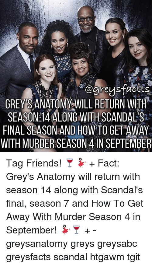 Friends, Memes, and Grey's Anatomy: greys tactts  GREY SANATOMY WILL RETURN WITH  SEASON 14 ALONG WITH SCANDALS  FINAL SEASON AND How TO GETAWAY  WITH MURDER SEASON 4 IN SEPTEMBER Tag Friends! 🍷💃🏻 + Fact: Grey's Anatomy will return with season 14 along with Scandal's final, season 7 and How To Get Away With Murder Season 4 in September! 💃🏻🍷 + - greysanatomy greys greysabc greysfacts scandal htgawm tgit