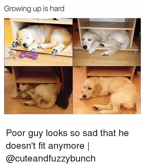 Growing Up, Memes, and Sad: Growing up is hard Poor guy looks so sad that he doesn't fit anymore | @cuteandfuzzybunch