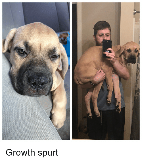 Growth Spurt, Months, and  Later: Growth spurt