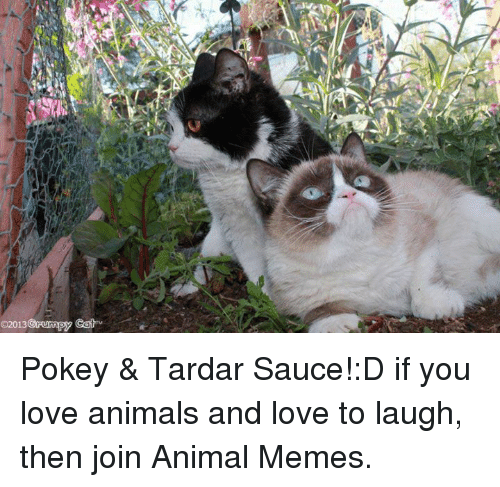Animals, Love, and Memes: Grumpy Cat  2013 Pokey & Tardar Sauce!:D
