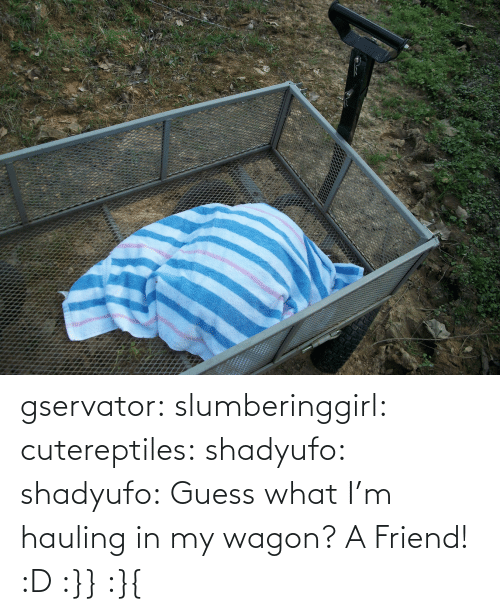 guess what: gservator: slumberinggirl:   cutereptiles:  shadyufo:  shadyufo: Guess what I'm hauling in my wagon? A Friend!    :D    :}}    :}{