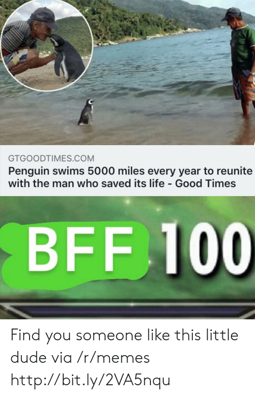 good times: GTGOODTIMES.COM  Penguin swims 5000 miles every year to reunite  with the man who saved its life - Good Times  BFF 100 Find you someone like this little dude via /r/memes http://bit.ly/2VA5nqu