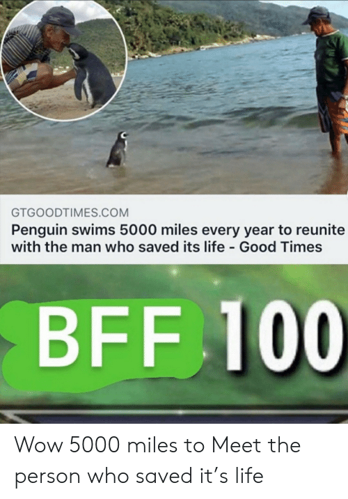 good times: GTGOODTIMES.COM  Penguin swims 5000 miles every year to reunite  with the man who saved its life Good Times  BFF 100 Wow 5000 miles to Meet the person who saved it's life