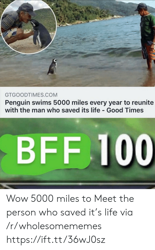 good times: GTGOODTIMES.COM  Penguin swims 5000 miles every year to reunite  with the man who saved its life Good Times  BFF 100 Wow 5000 miles to Meet the person who saved it's life via /r/wholesomememes https://ift.tt/36wJ0sz