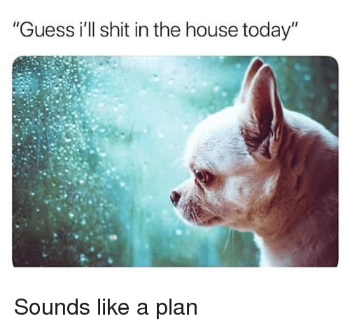"Shit, Guess, and House: ""Guess i'll shit in the house today"" Sounds like a plan"