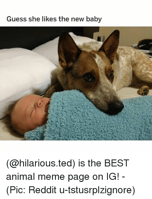Meme, Memes, and Reddit: Guess she likes the new baby (@hilarious.ted) is the BEST animal meme page on IG! - (Pic: Reddit u-tstusrplzignore)