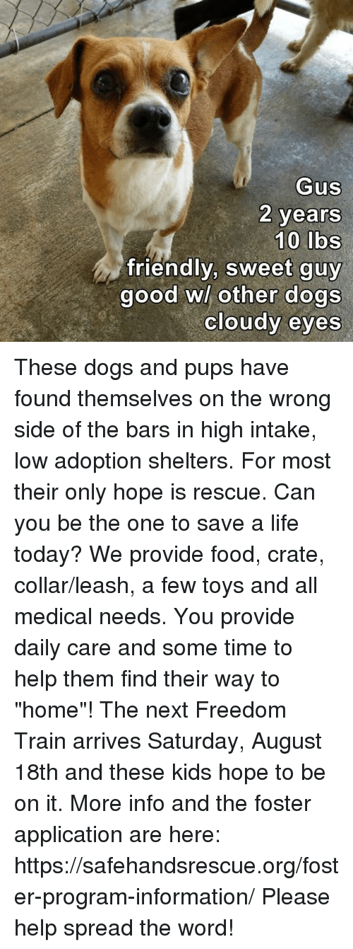 """Dogs, Food, and Life: GuS  2 years  friendly, sweet guy  good wl other dogs  cloudy eyes These dogs and pups have found themselves on the wrong side of the bars in high intake, low adoption shelters.  For most their only hope is rescue.  Can you be the one to save a life today?  We provide food, crate, collar/leash, a few toys and all medical needs.  You provide daily care and some time to help them find their way to """"home""""!  The next Freedom Train arrives Saturday, August 18th and these kids hope to be on it.  More info and the foster application are here:  https://safehandsrescue.org/foster-program-information/  Please help spread the word!"""