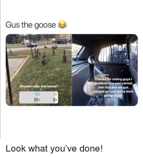 Jail, Home, and Got: Gus the goose  Thanks for voting guysi  grabbed one and named  him Gus but we got  caught so now were both  going to jail  Should I take one home?  YES  N0 Look what you've done!