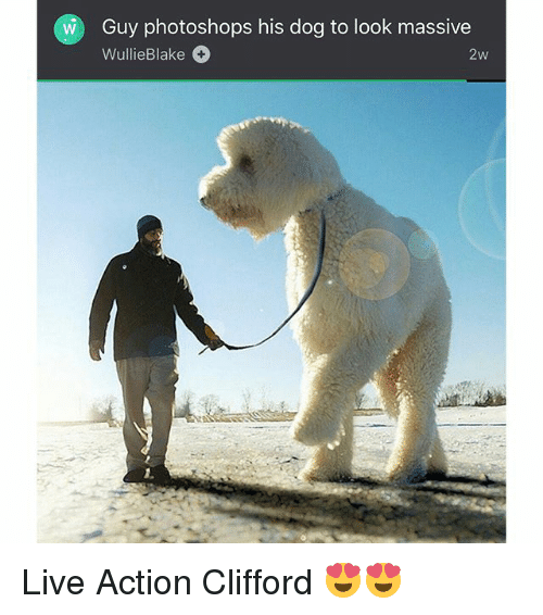 Memes, Live, and 🤖: Guy photoshops his dog to look massive  WullieBlake  2w Live Action Clifford 😍😍